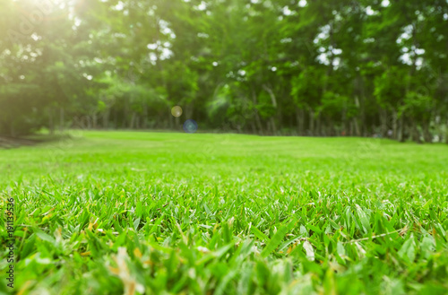Foto auf Leinwand Gras Close up green grass field with tree blur park background,Spring and summer concept