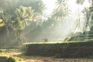 Obraz na płótnie Canvas Farmer working in the rice field of Bali