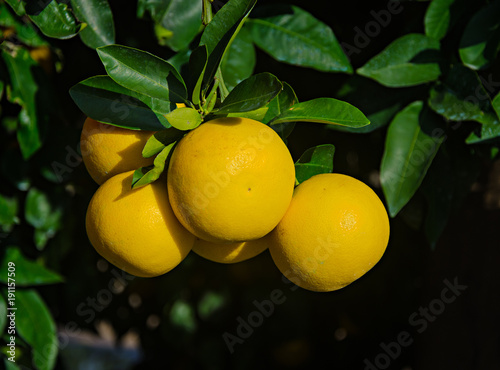 close up of ripe grapefruits