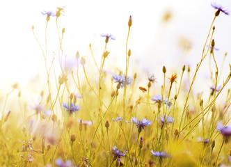 Fototapeta Łąka meadow flowers