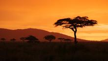 African Golden Sunset With Acacia Tree In Serengeti Tanzania