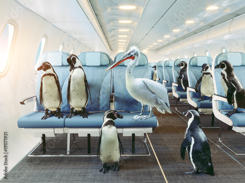 La pose en embrasure Pingouin penguins and pelican in the airplane cabin.