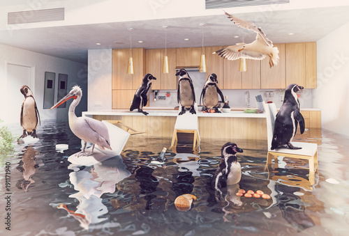 birds in the flooding kitchen