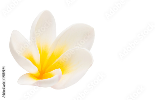 La pose en embrasure Frangipanni plumeria flower isolated