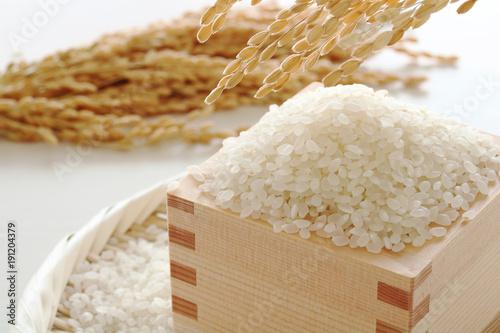 お米 稲穂