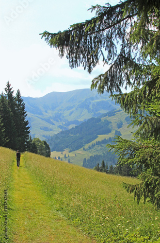 Fotografie, Obraz  hiker on a path through meadows in the Alpes near Salzburg, Austria