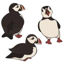 Puffin Vector Set Isolated On ...