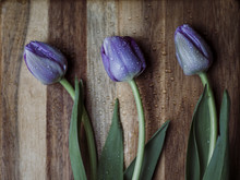 High Angle View Of Wet Purple Tulips On Wooden Table