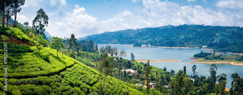 Fotografía Beautiful view on tea plantation near Nuwara Eliya, Sri Lanka