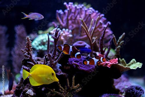 Poster Sous-marin Coral reef aquarium tank