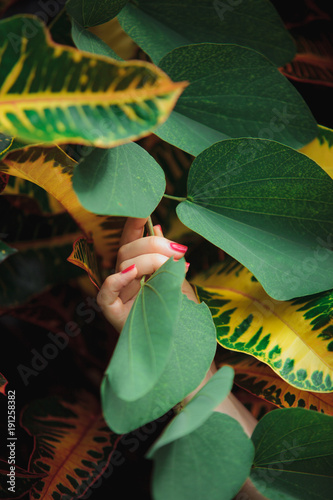 Fototapety, obrazy: Female hands touching beautiful exotic leaves. Unity of nature and human concept.