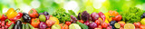 Fototapeta Panels - Panorama of fresh vegetables and fruits on blurred background of green leaves.