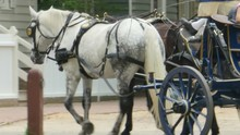 3857 Horse Drawn Carriage Walk...