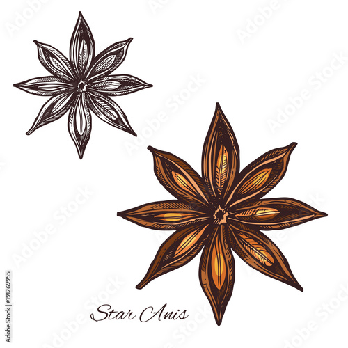 Star anise spice sketch of badian fruit and seed Canvas Print