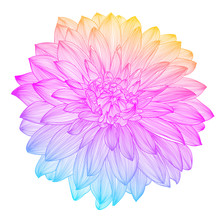 Hand Drawing Rainbow Flower, V...