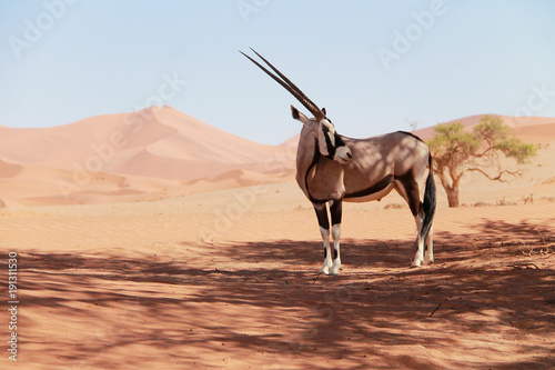 Door stickers Antelope Orix Namibia
