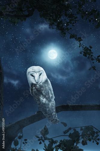 Auf dem Baum stehende Eule wird vom Mondlicht erhellt