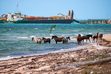 Wild Horses In The Water With ...