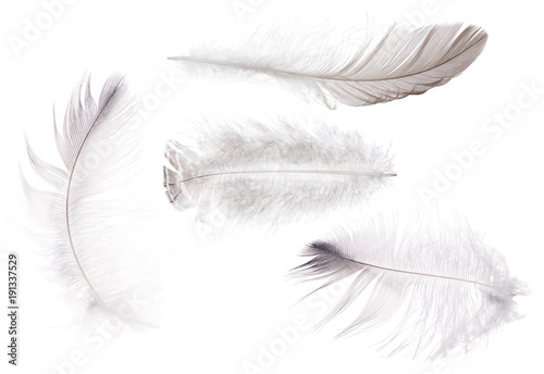 four fluffy isolated light grey feathers