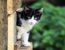 A Little Scared Kitten Peeps O...