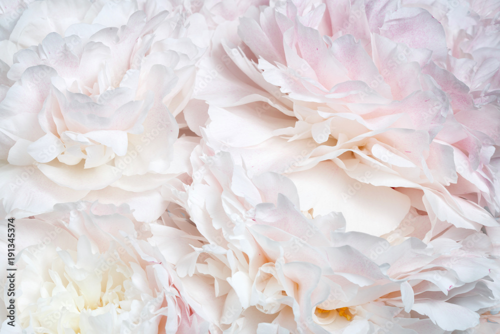 Fototapety, obrazy: Abstract floral wallpaper from peony flowers.