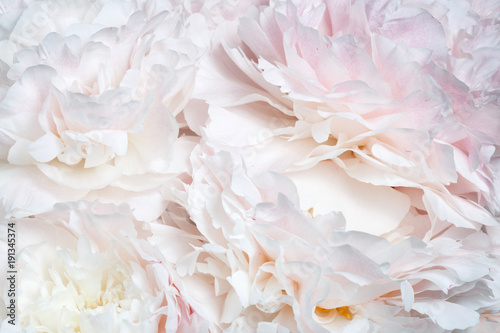 Abstract floral wallpaper from peony flowers.