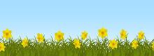 Yellow Daffodils In Green Gras...
