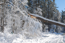 Large Tree Fallen Onto An Elec...