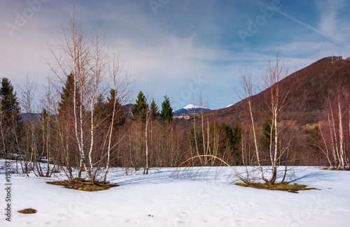 Poster Diepbruine beautiful scenery with birch trees on snowy slope
