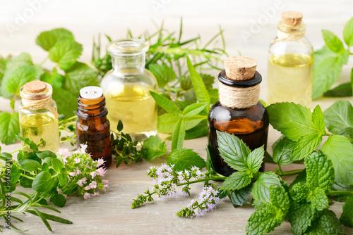 Fototapeta fresh herbs and massage oils on the wooden board obraz
