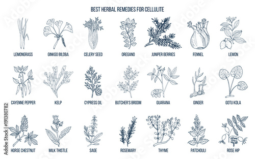 Foto  Collection of best herbs for cellulite