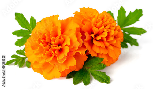 Fotografía  fresh marigold flowers isolated on white background