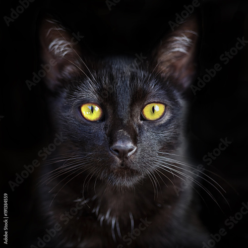 Closeup portrait of cute black cat with yellow eyes, domestic pet Poster Mural XXL