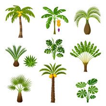 Tropical Palm Trees Set. Exoti...