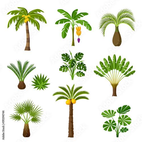 zestaw-tropikalny-palmy-egzotyczne-rosliny-tropikalne-ilustracja-natury-dzungli