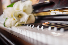 Wedding Rings And A Bouquet Of White Callas On The Piano Keys.