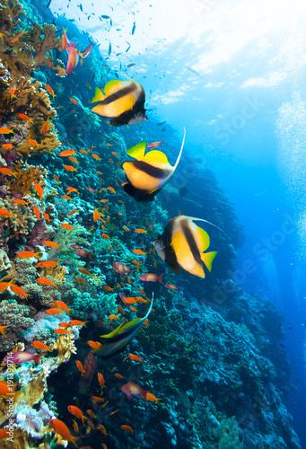 Zdjęcie kolonii koralowców.