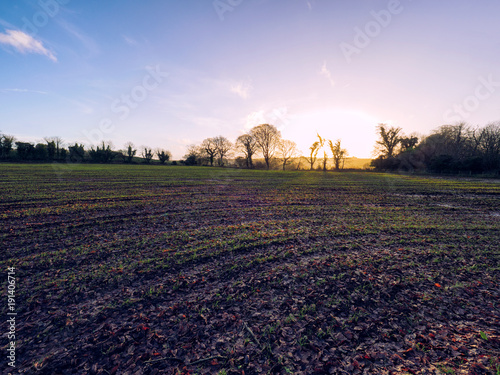 Foto op Canvas Purper winter countryside morning,Northern Ireland