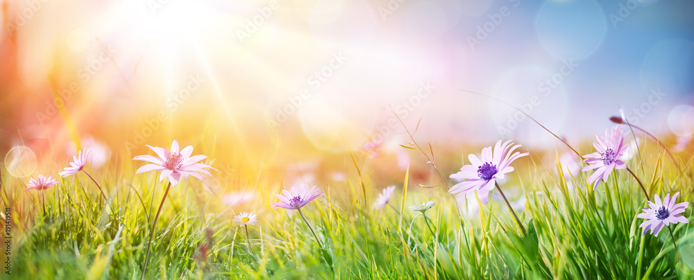 Fototapety, obrazy: Daisies On Field - Abstract Spring Landscape