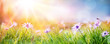 canvas print picture Daisies On Field - Abstract Spring Landscape