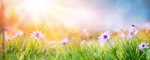 Spoed Foto op Canvas Lente Daisies On Field - Abstract Spring Landscape