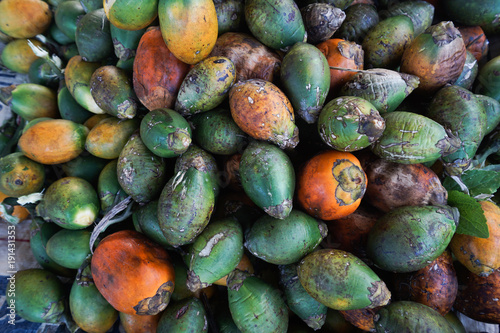 The areca nut is the seed of the areca palm (Areca catechu), which grows in much of the tropical countries Canvas Print