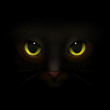 Cat Monster Realistic Composit...