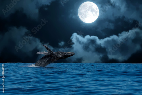 Valokuvatapetti humpback whale breaching at night on full moon background