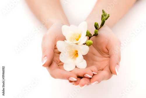 Wall Murals Pedicure cropped view of hands holding freesia, isolated on white