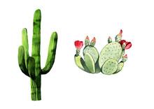 Watercolor Cactus Set Illustra...