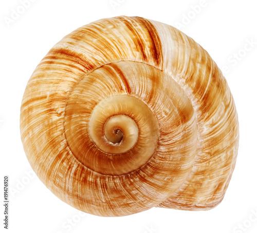 Fotomural  Snail shell