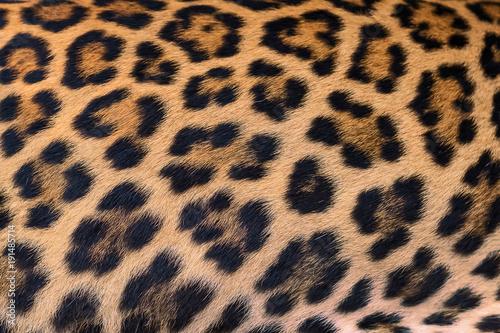 Leopard fur background. Canvas Print
