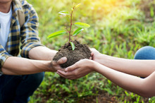 Couple Planting And Watering A Tree Together On A Summer Day In Park, Volunteering, Charity People And Ecology Environment And Ecology Concept.