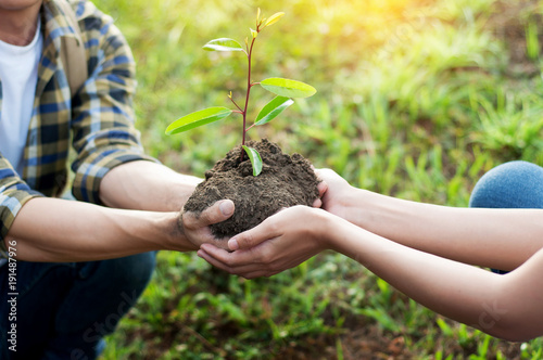 couple planting and watering a tree together on a summer day in park, volunteering, charity people and ecology Environment and ecology concept Fototapete